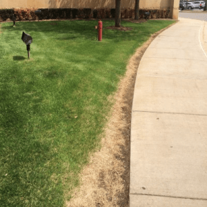 Displacement of lawn is also one of the maintenances