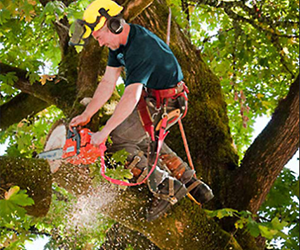 Step by step instructions to know a tree limb will fall and suggestions to do